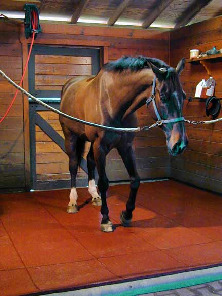 establo-caballo-pavimento-goma-pavigreen